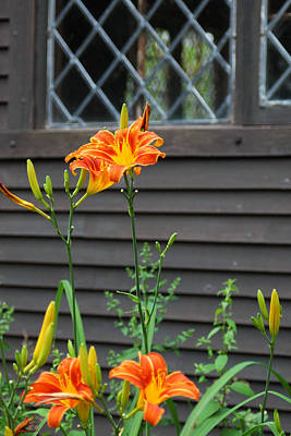 Lilies Royalty-Free and Rights-Managed Images - Tiger Lilies by Joann Vitali