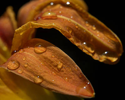 Photograph - Tiger Lilly Leaf With Raindrops by Barry Doherty