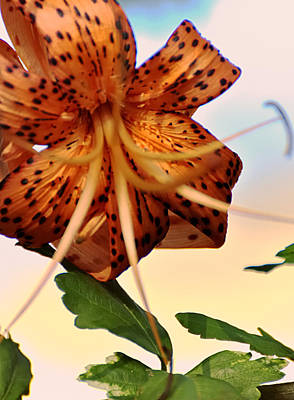 Tiger Lillies Photograph - Tiger Lilly by Vicki Jauron
