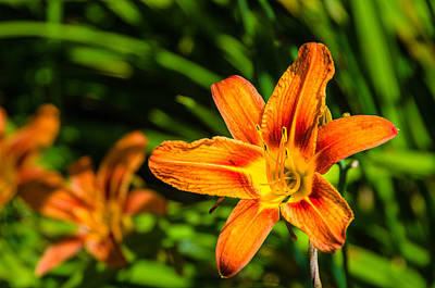 Ken Beatty Photograph - Tiger Lily 02 by Ken Beatty