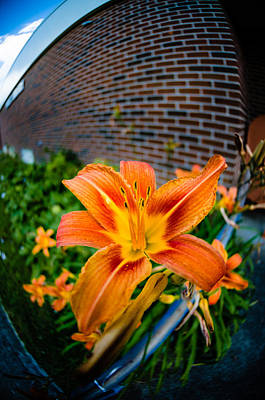 Ken Beatty Photograph - Tiger Lily 04 by Ken Beatty