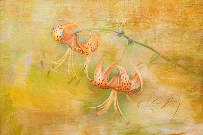 Wild Tiger Lily Photograph - Tiger Lily by Carolyn Dalessandro