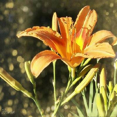 Lilies Wall Art - Photograph - Tiger Lily Dream. #lily #lilybuds by Jess Gowan
