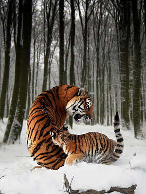 Tiger Cub Digital Art - Tiger Mother With Cub by Julie L Hoddinott