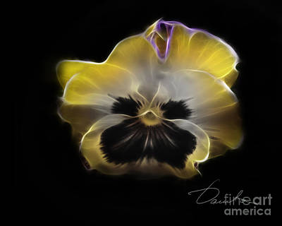 Photograph - Tiger Pansy by Danuta Bennett