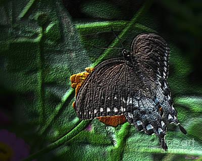 Spicebush Swallowtail Butterfly Dark Art Print