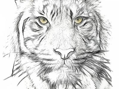 Tiger Art Print by Tilly Williams