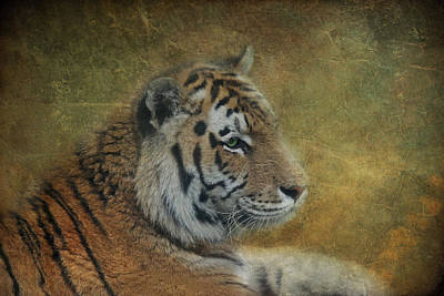 Tigerlily Art Print by Claudia Moeckel