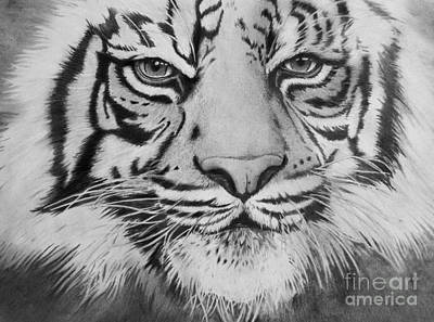 Drawing - Tiger's Eyes by Christian Conner