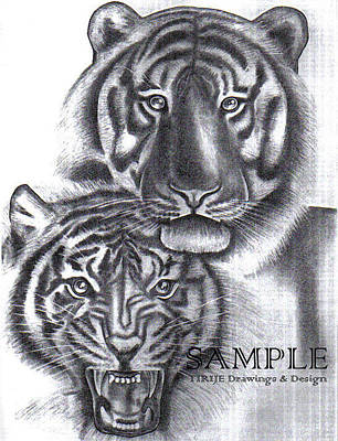 Album Covers Drawing - Tigers by Rick Hill