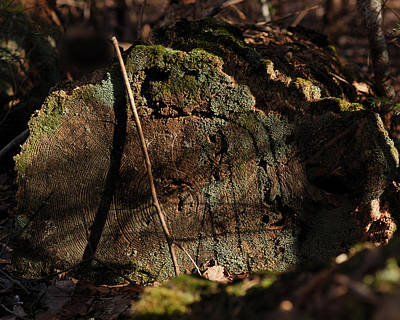 Lichen Photograph - Time by Susan Capuano