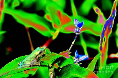 Photograph - Timothy Leary's Frog by Don Youngclaus