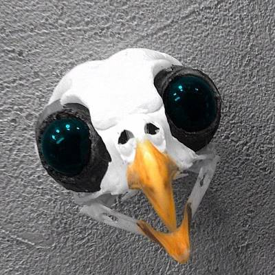 Finch Wall Art - Photograph - Tiny #bird Skull With Big Eyes by Pete Michaud