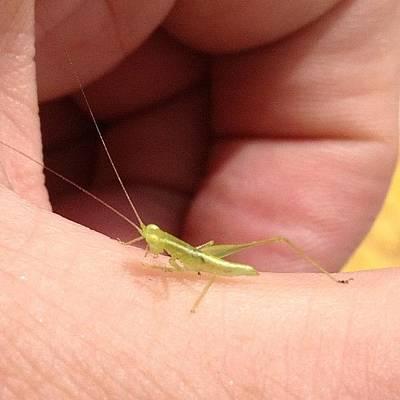 Instagramhub Photograph - Tiny Grasshopper by Cameron Bentley