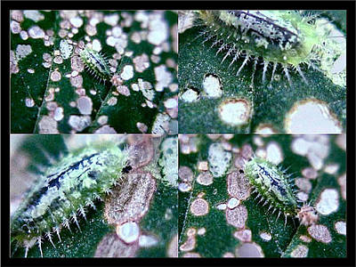 Photograph - Tiny Leech by Glenn Bautista