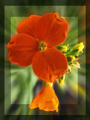 Art Print featuring the photograph Tiny Orange Flower by Debbie Portwood