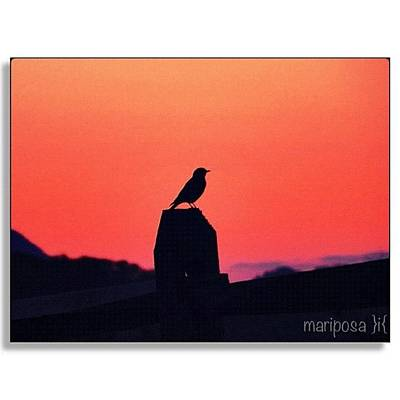 Lavender Wall Art - Photograph - Tiny Silhouette At Dusk by Mari Posa