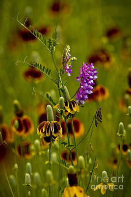 Photograph - Tishomingo Wildflowers by Royce  Gideon