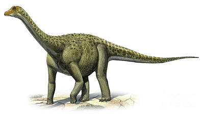 Titanosaurus Indicus, A Prehistoric Era Art Print by Sergey Krasovskiy