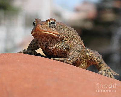 Traditional Bells - Toad on Red Rock by Jack Schultz