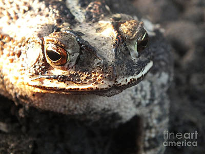Photograph - Toad Smile by Tammy Herrin