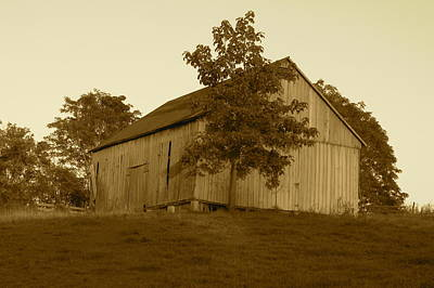 Photograph - Tobacco Barn II In Sepia by JD Grimes