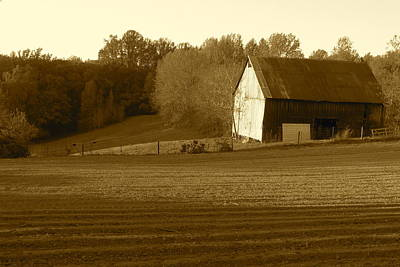 Photograph - Tobacco Barn In Sepia by JD Grimes