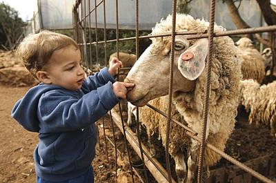 Pet Care Photograph - Toddler With A Sheep by Photostock-israel