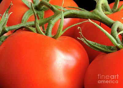 Photograph - Tomato by Nancy Greenland
