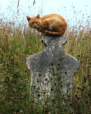 Tombstone Cat Art Print by Still Watters