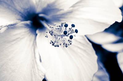 Genus Photograph - Toned Hibiscus by Joe Carini - Printscapes