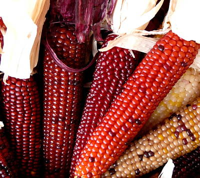 Photograph - Tones Of Red Indian Corn by Jeff Lowe