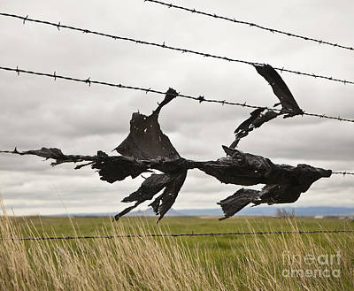 Torn Bags On A Barbed Wire Fence Art Print by Paul Edmondson