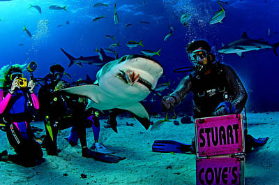 Tourists Dive Or Snorkel With Sharks Art Print by Brian J. Skerry