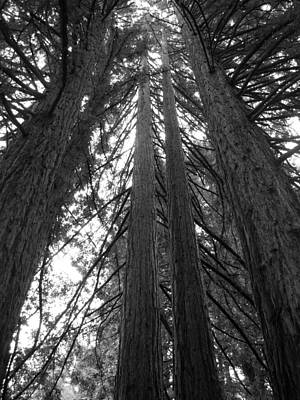 Photograph - Towering Giants by Matt Hanson