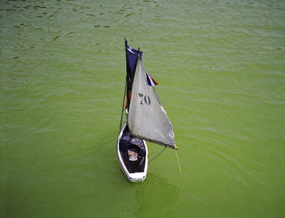 Photograph - Toy Sailboat On Pond by Donna Munro
