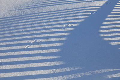 Snowshoe Hare Photograph - Tracks In The Shadows by Tim Grams