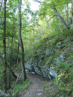 Photograph - Trail From Henwallow Falls by Joel Deutsch