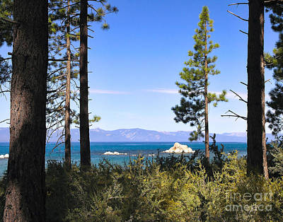 Photograph - Trailside - Lake Tahoe by John Waclo