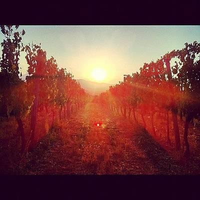 Vineyard Wall Art - Photograph - #tramonto #sunset #sun #vigneto by Simone Montemezzo