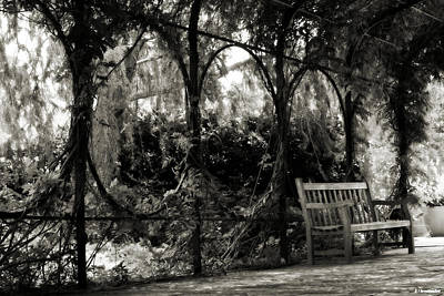 Tranquil Leaf Covered Walkway In Black And White Art Print