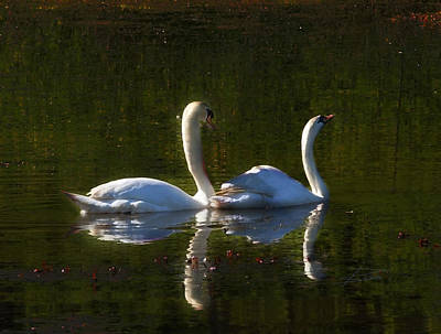 Photograph - Tranquility by Barbara  White