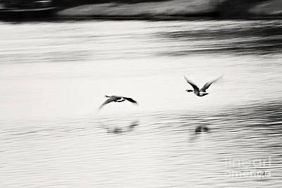 South Louisiana Photograph - Tranquility by Scott Pellegrin