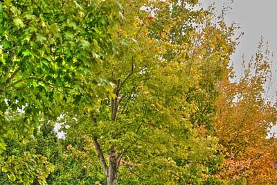 Art Print featuring the photograph Transition Of Autumn Color by Michael Frank Jr