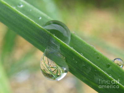 Environment Photograph - Transparency by Tina Marie