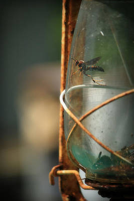 Photograph - Trapped by Mandy Shupp