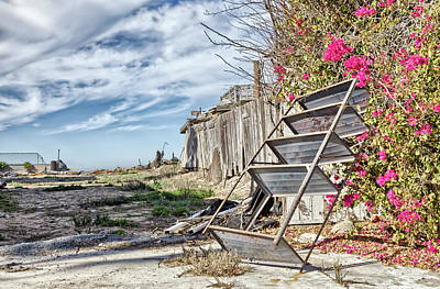 Photograph - Trash With Bougainvillea by Peter Dyke