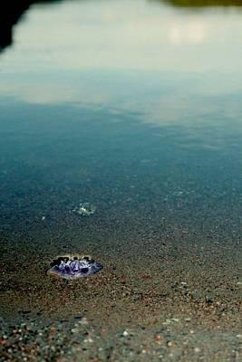 Photograph - Treasure At Shore by Derya  Aktas