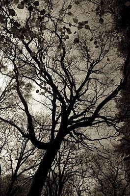 Tree 01 Original