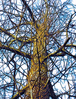 Photograph - Tree Against A Winter Sky by Judi Bagwell